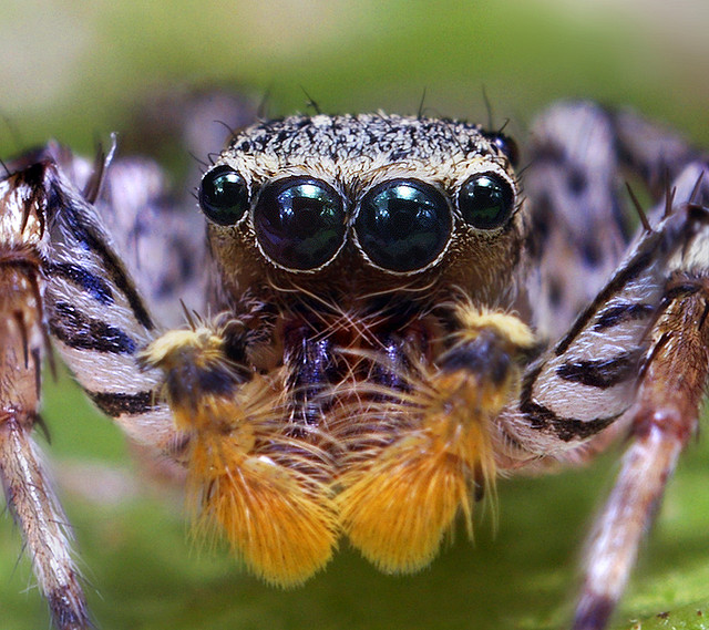 How Many Eyes Does a Spider Have? - The Infinite Spider