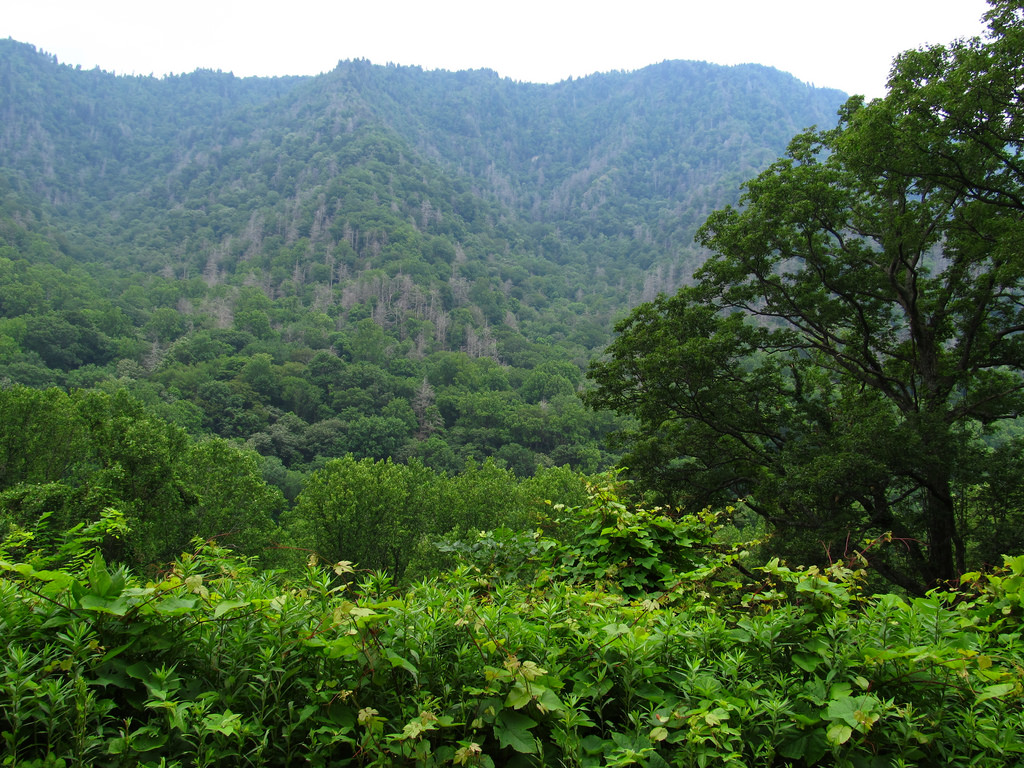 43 Photos Of The Great Smoky Mountains Infinite World