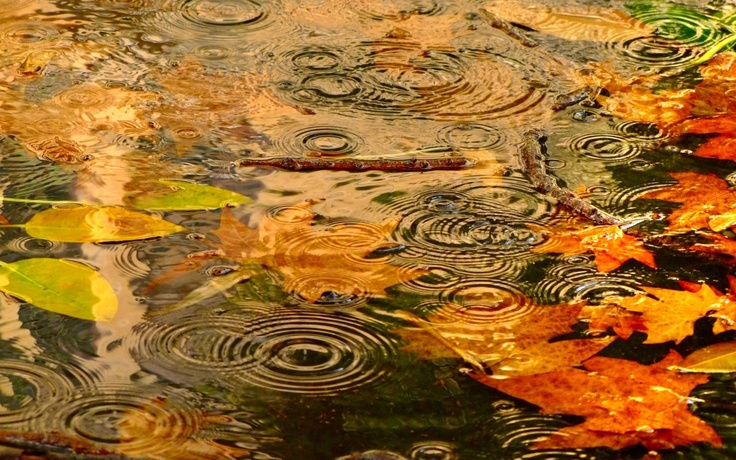 Autumn Falling Leaves Live Wallpaper Autumn Rain Infj Ramblings
