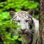 offre comité d'entreprise- magazine influence!ce- zoo de beauval offre pour les comités d'entreprises-8