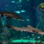 Aquarium des requins©OCEANOPOLIS