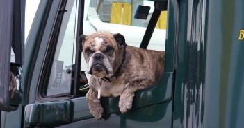 Cestování  se psem