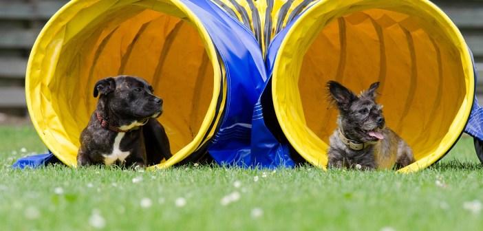 Dva psi se od sebe vzájemně učí