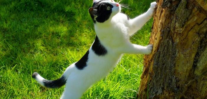 Kočka si plete strom se škrabadlem