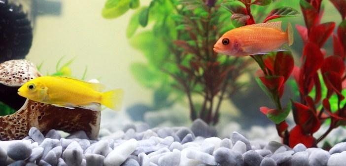 Jak vybrat správné krmivo pro  akvarijní ryby 1