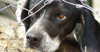 Týrání psů v množírnách