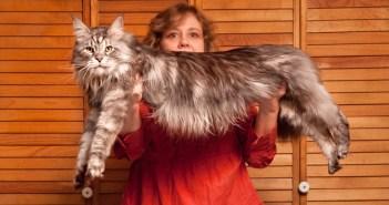 Nejdelší kočka na světě