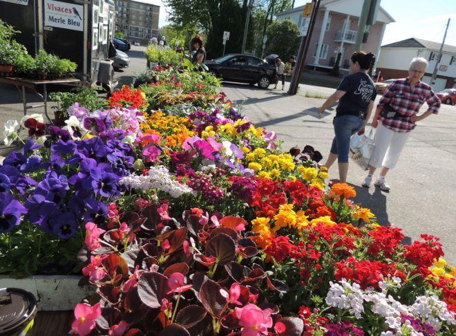 marche_fleurs_str2016_1