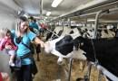 Dimanche 11 septembre : portes ouvertes aux fermes Dubuc et Laurier