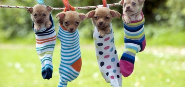 Www Cute Puppies Wallpaper Com Im 225 Genes De Perros Bonitos Los Cachorros M 225 S Tiernos