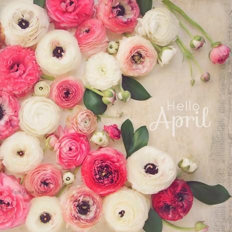 Violet Flower Hd Wallpaper Im 225 Genes De Bienvenido Feliz Mes De Abril Con Frases