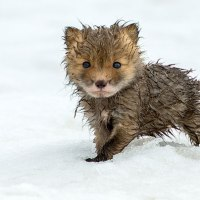 61 Cute Baby Animals Pictures That Will Make You Say 'Aww'