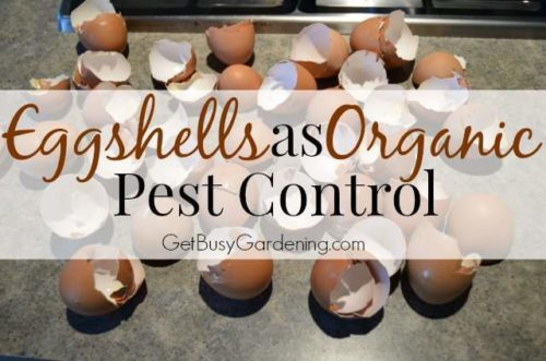 Image Credit: http://getbusygardening.com
