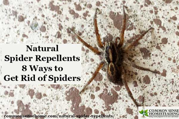 Natural Remedy To Rid House Of Spiders