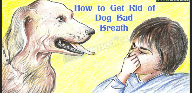 how to get rid bad dog breath