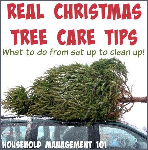 xreal-christmas-tree-care-jpg-pagespeed-ic-6yfbof7mwb