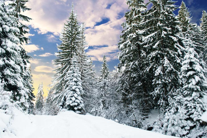Falling Snow Wallpaper Widescreen Christmas Tree Farms Are Shutting Down Due To Climate