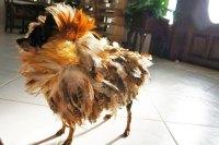 10 Adorable DIY Halloween costumes for pets | Inhabitat ...