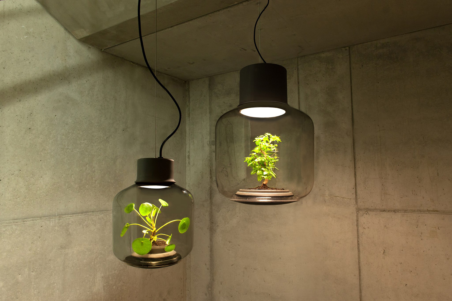 Lamp Plant These Lamps Let You Grow Plants Anywhere Even In Windowless Rooms