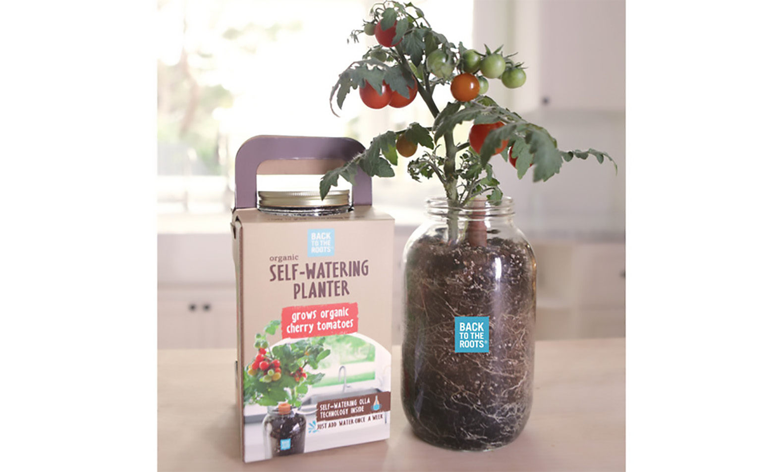 Make Self Watering Planters Affordable Self Watering Planter Lets You Grow A Countertop Garden