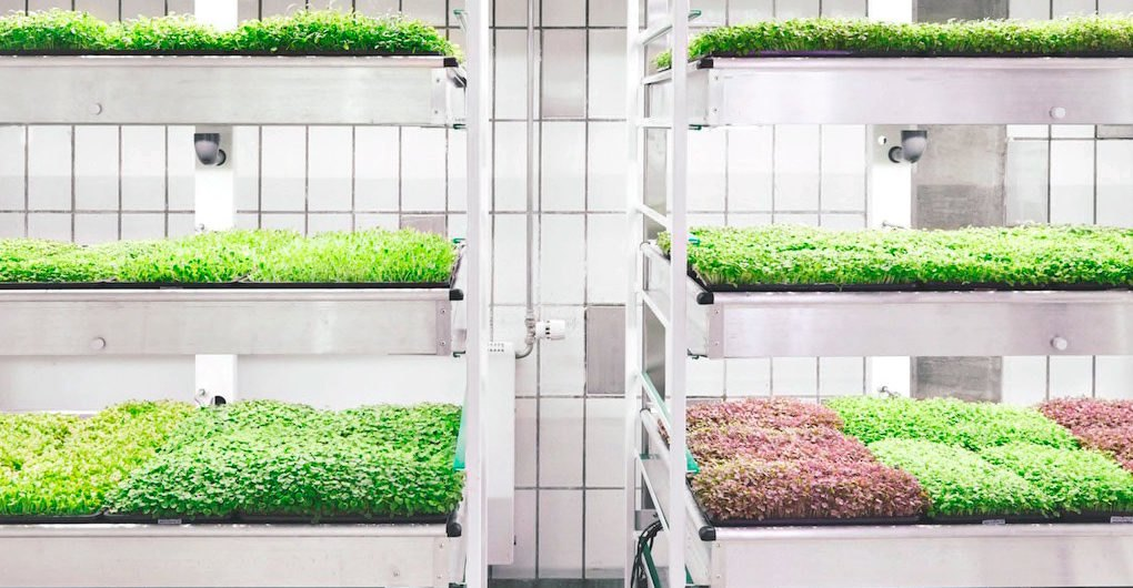 Taste The Future With Ikea S Space10 Lokal Hydroponic Food - Ikea Küchenplaner Lokal