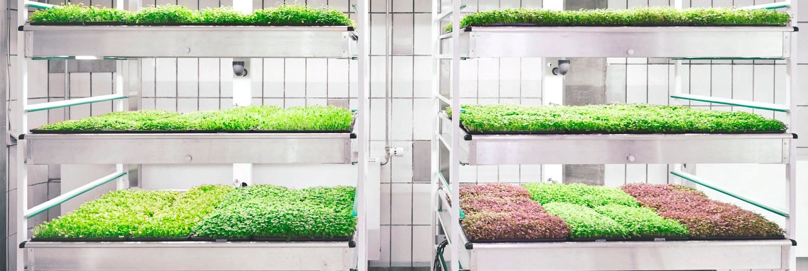 Taste The Future With Ikea 39 S Space10 Lokal Hydroponic Food - Ikea Küchenplaner Lokal