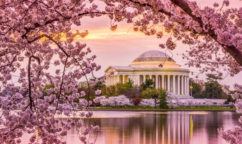 Climate change is causing spring to come earlier in national parks - cherry blossom animated