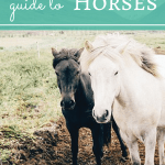 The Fantasy Writer's Guide to Horses
