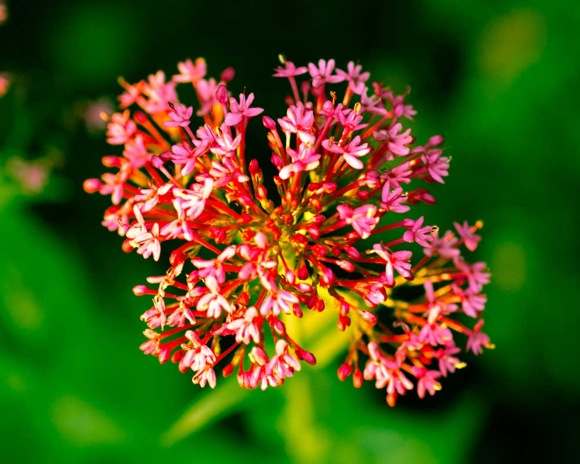 Macey flower two
