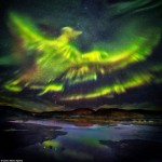northern lights bird