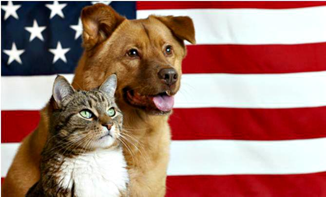 Cute Wallpapers Of Kittens And Puppies Happy Memorial Day Inotternews Com