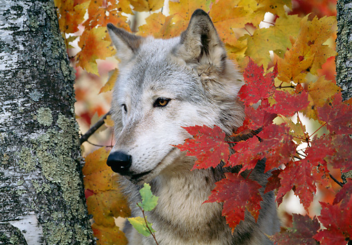 Cute Fall Leaves Wallpaper Animals In Autumn Inotternews Com