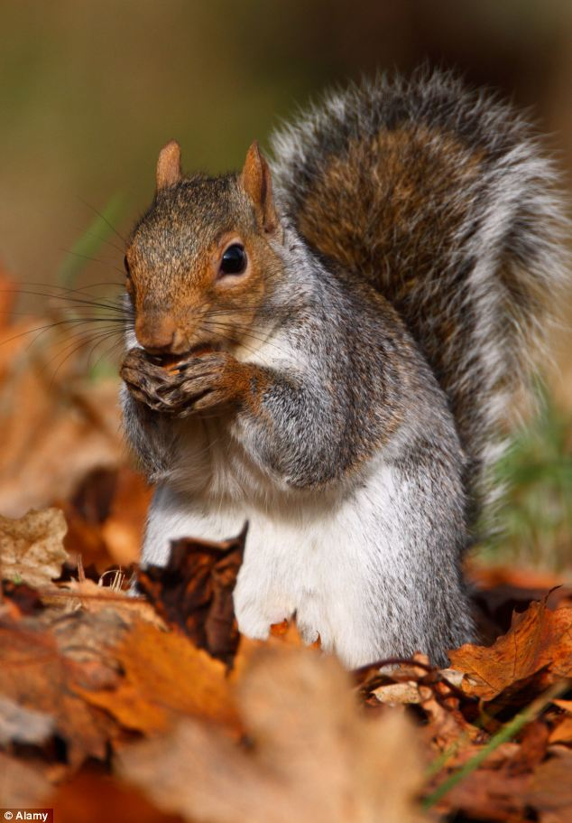 Cute Science Wallpaper Animals In Autumn Inotternews Com