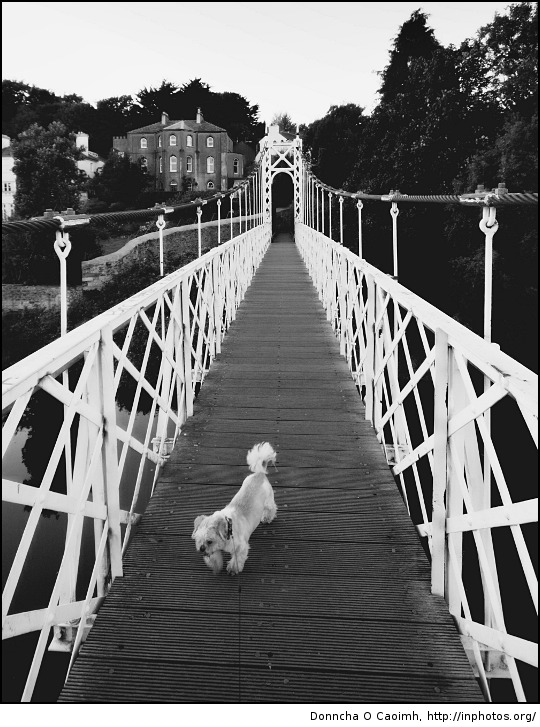 Oscar on the Shaky Bridge