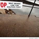 Dolphin Ferry