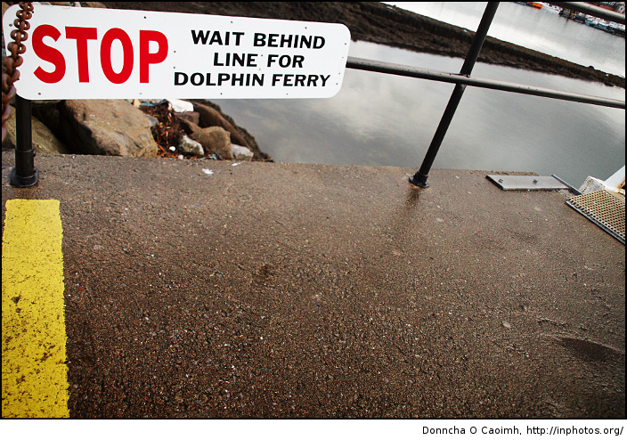 Dolphin Ferry