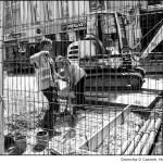 Digging up Daunt Square