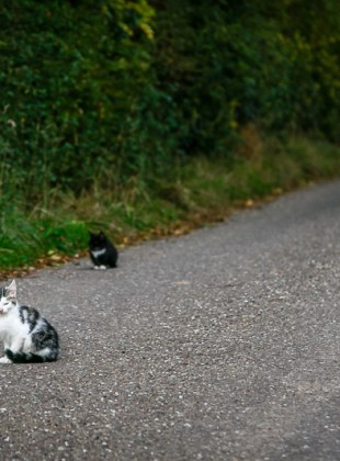 North Cork Kittens
