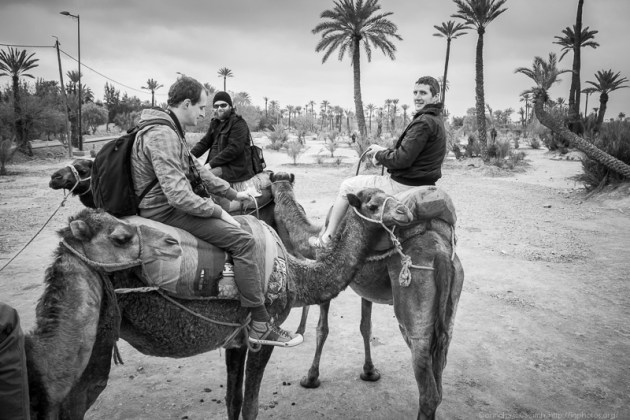 The Camel Riders
