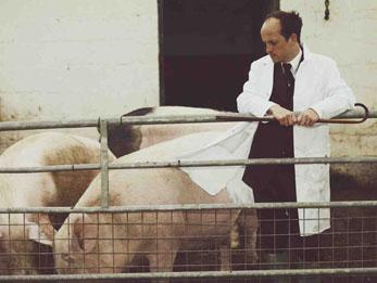 Matthew Herbert with pigs