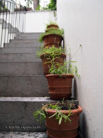 Pot plants, Graanmarkt 13, Antwerp, Belgium