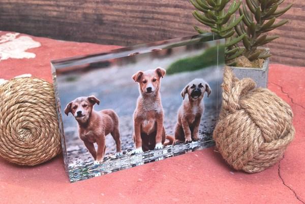 acrylic-blocks-Animallover