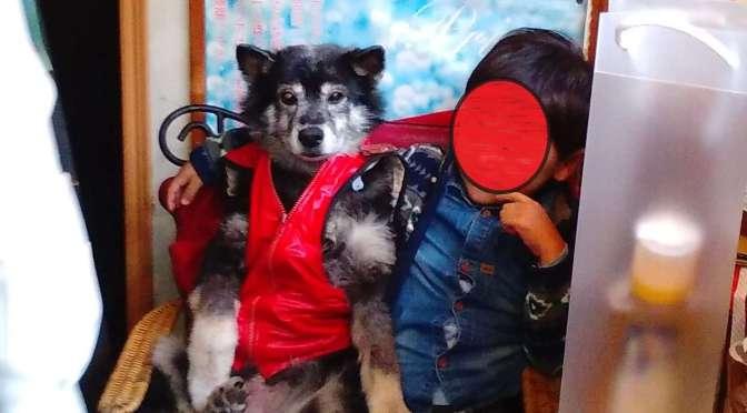 Priya the magical dog, killer hornets and stone grilled food |Kawagoe