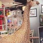 Studio Cafe Zoo Adventure (2)