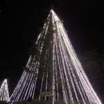 One of the trees decorated in lights