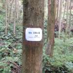 Sign marking the way to the waterfall through the forest