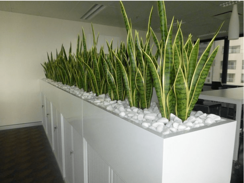 Partisi Interior Indoor Plant Hire - Office Plant Hire Melbourne