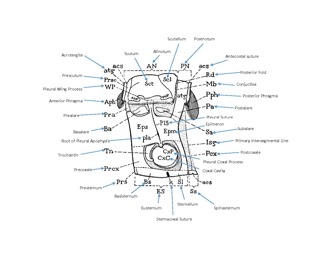 fuse boxes explained