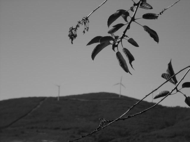 eolicos_insitu_2013_P025 Energías