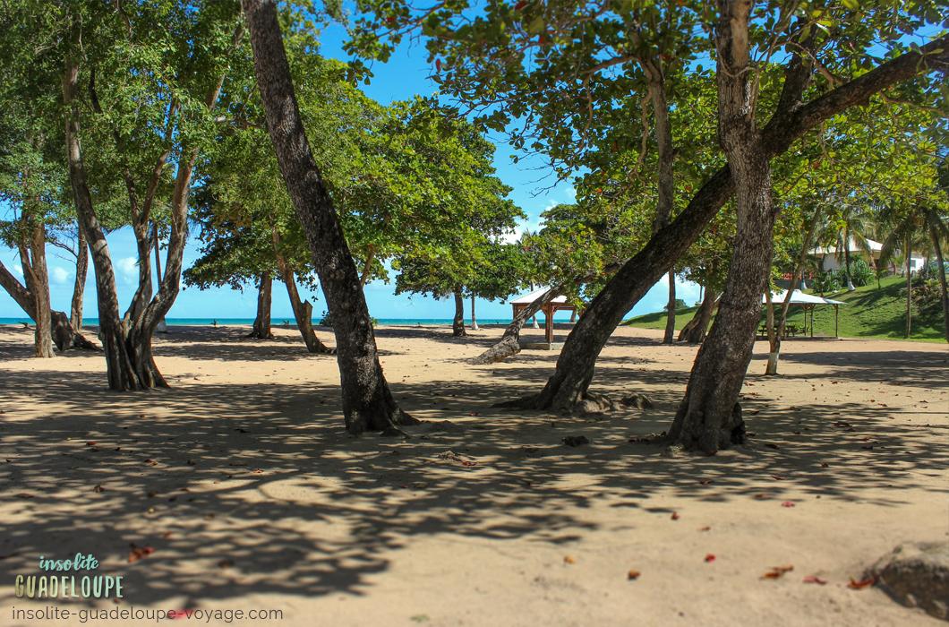 plage-des-amandiers-guadeloupe-sable-fin-ombre-belle-basse-terre
